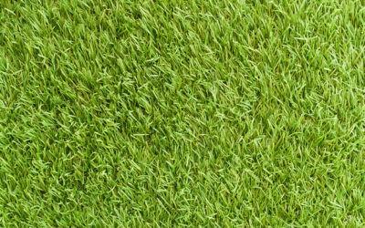Jak utrzymać piękny trawnik