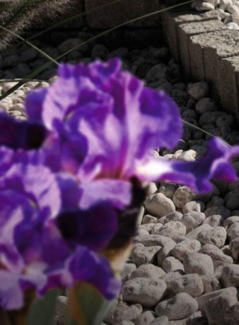 Kamień ogrodowy Patio to najlepszy element dekoracji
