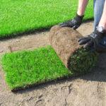 Trawnik z rolki krok po kroku - jak go założyć?