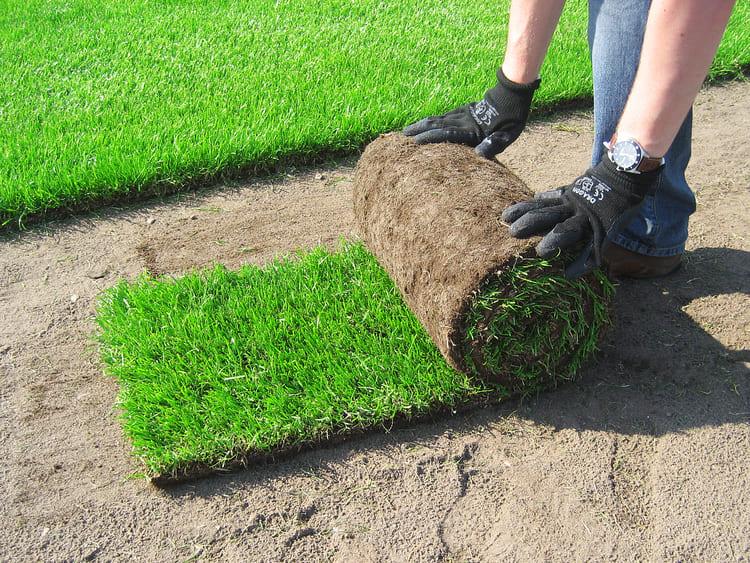 Trawnik z rolki krok po kroku – jak go założyć?